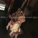 麻縄緊縛 SMクラブ 女王様 吊り Kinbaku shibari japanese rope bondage